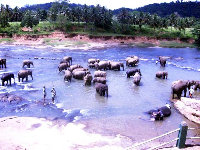 Шри-Ланка. Купить страховку для поездки онлайн